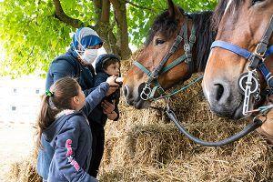 famille qui donne une carotte à u. cheval