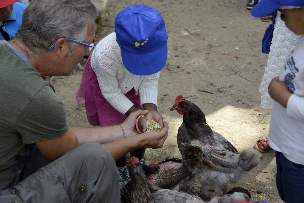 Animation ferme pédagogique, enfants et animateur donnant à manger à une poule