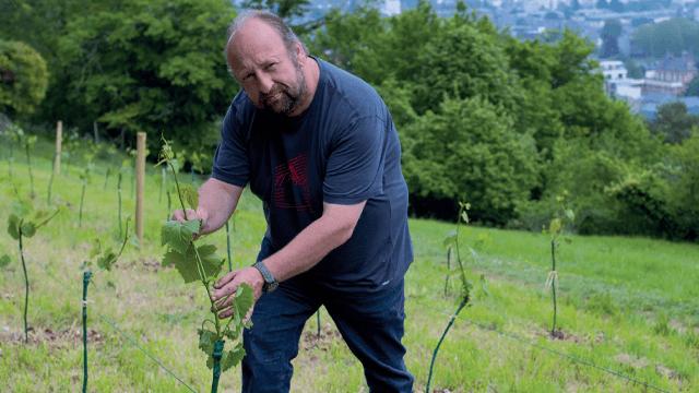Franck Amisse - Vignes de Saint-Michel