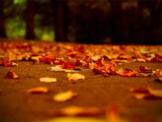 feuille mortes dechets verts automne