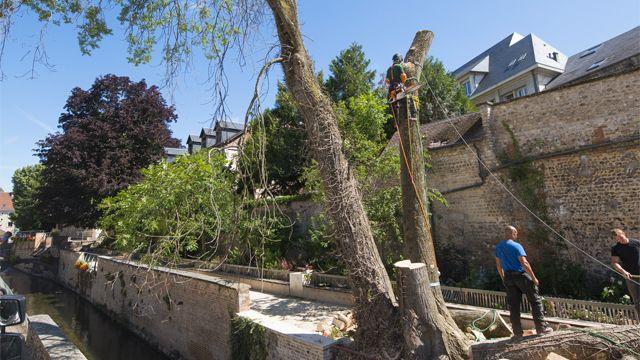 Abattage d'arbres sur la promenade de l'Iton