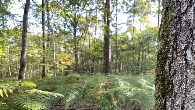 Photo de la forêt de La Madeleine