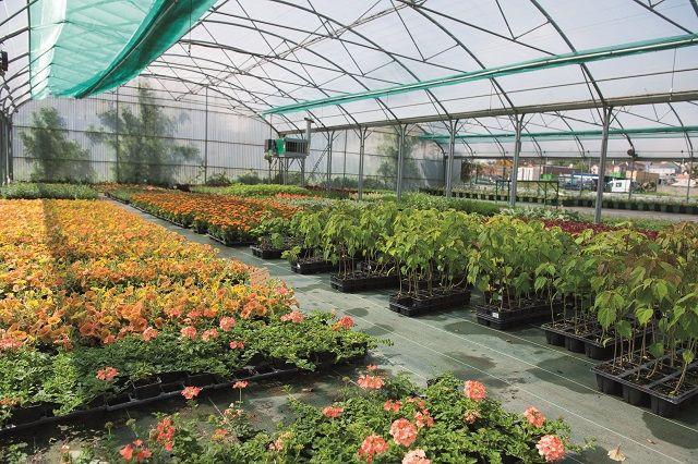 serres municipales avec de nombreux plants