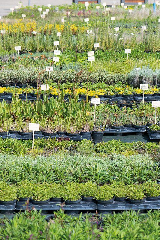Zoom sur des plants en pots